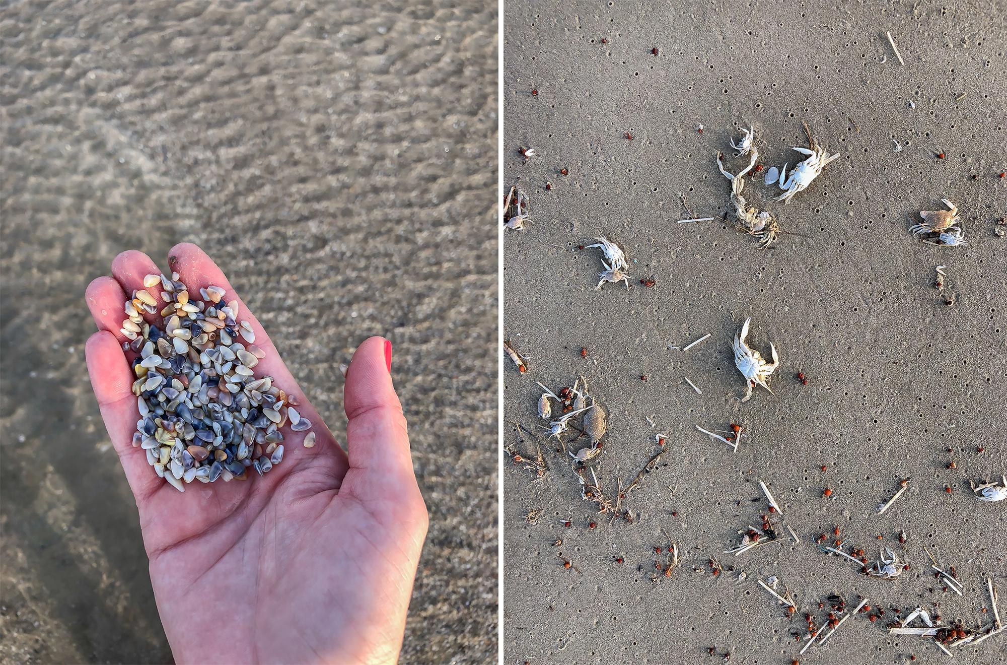 Beach color palette. | Padre Island National Seashore, Texas | June 2018