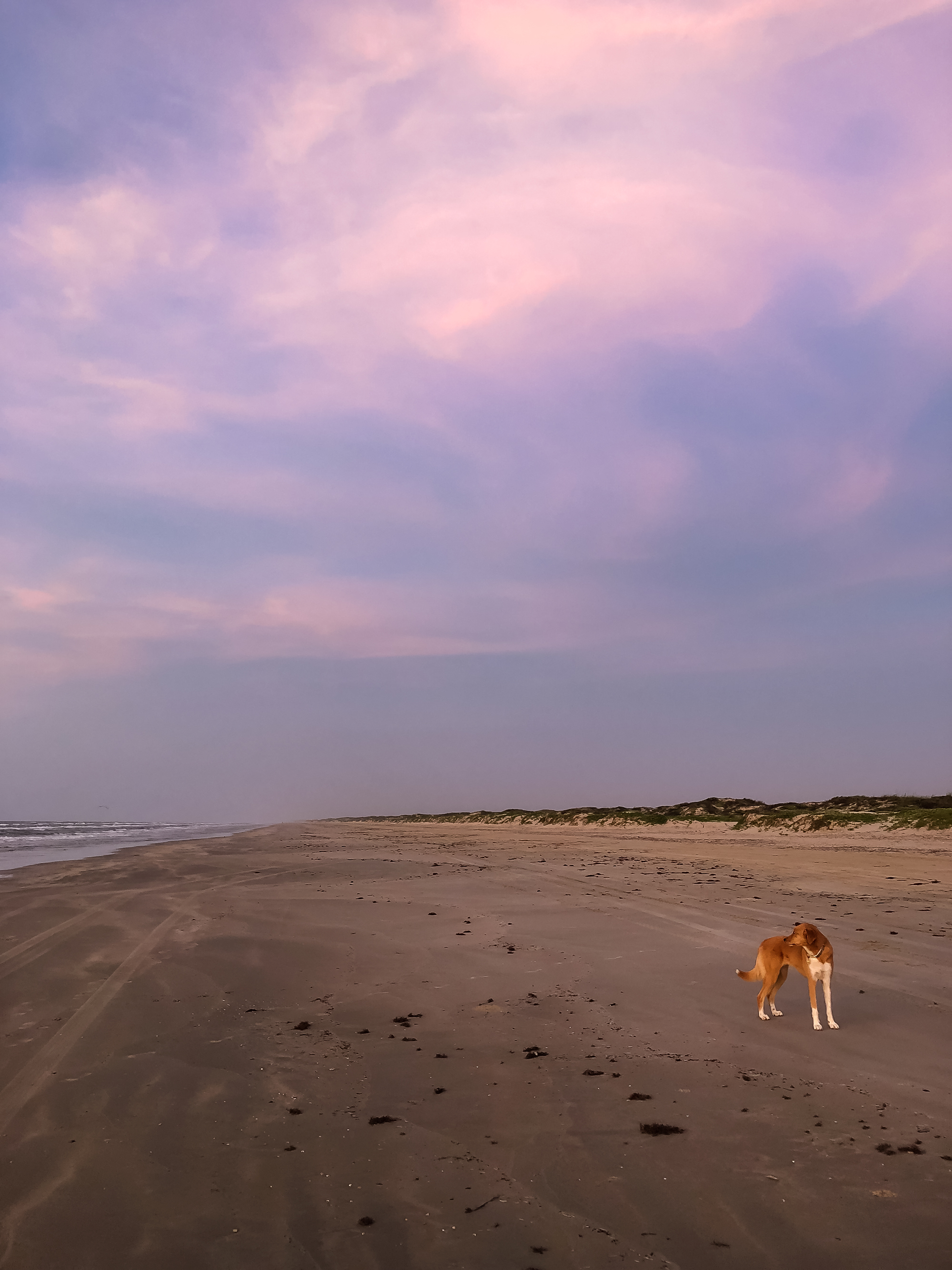 We had the beach to ourselves. | Padre Island National Seashore, Texas | June 2018