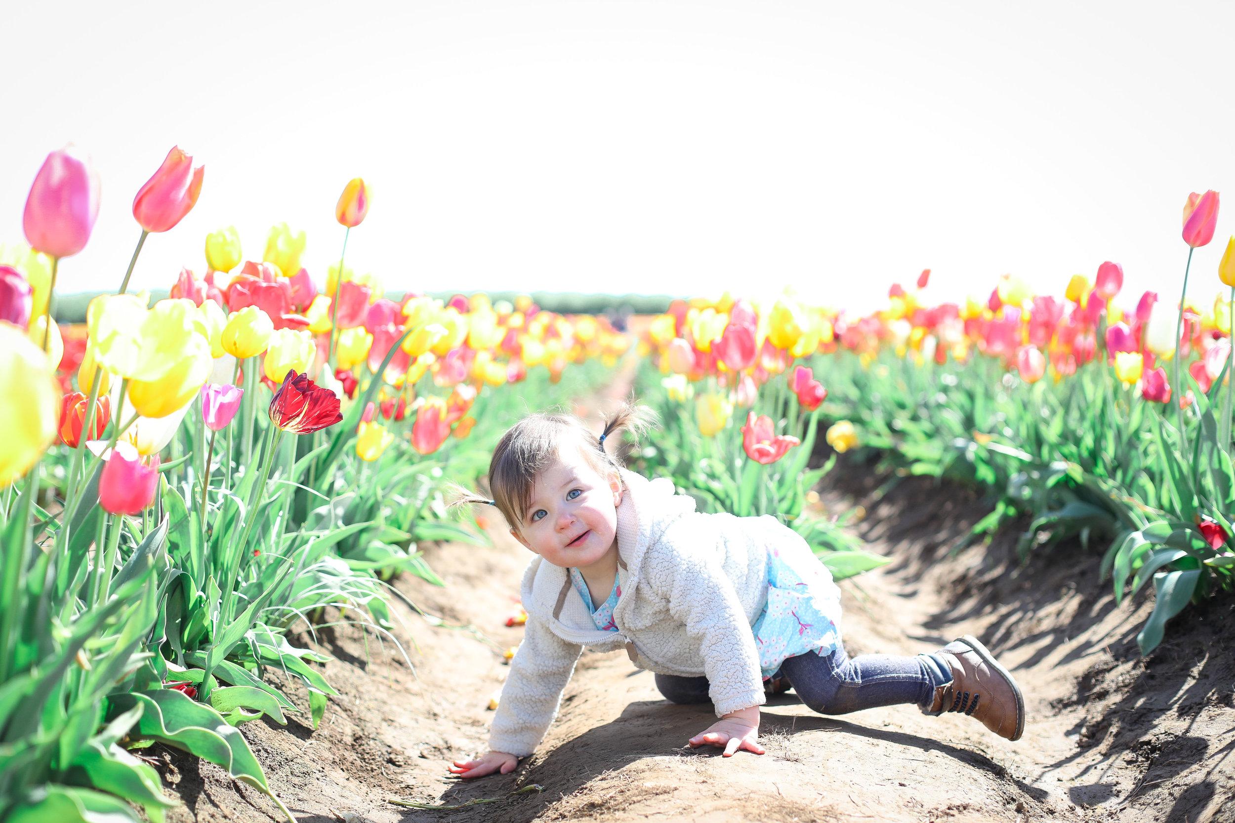 Erin Fortin Photography_tulip fest.jpg