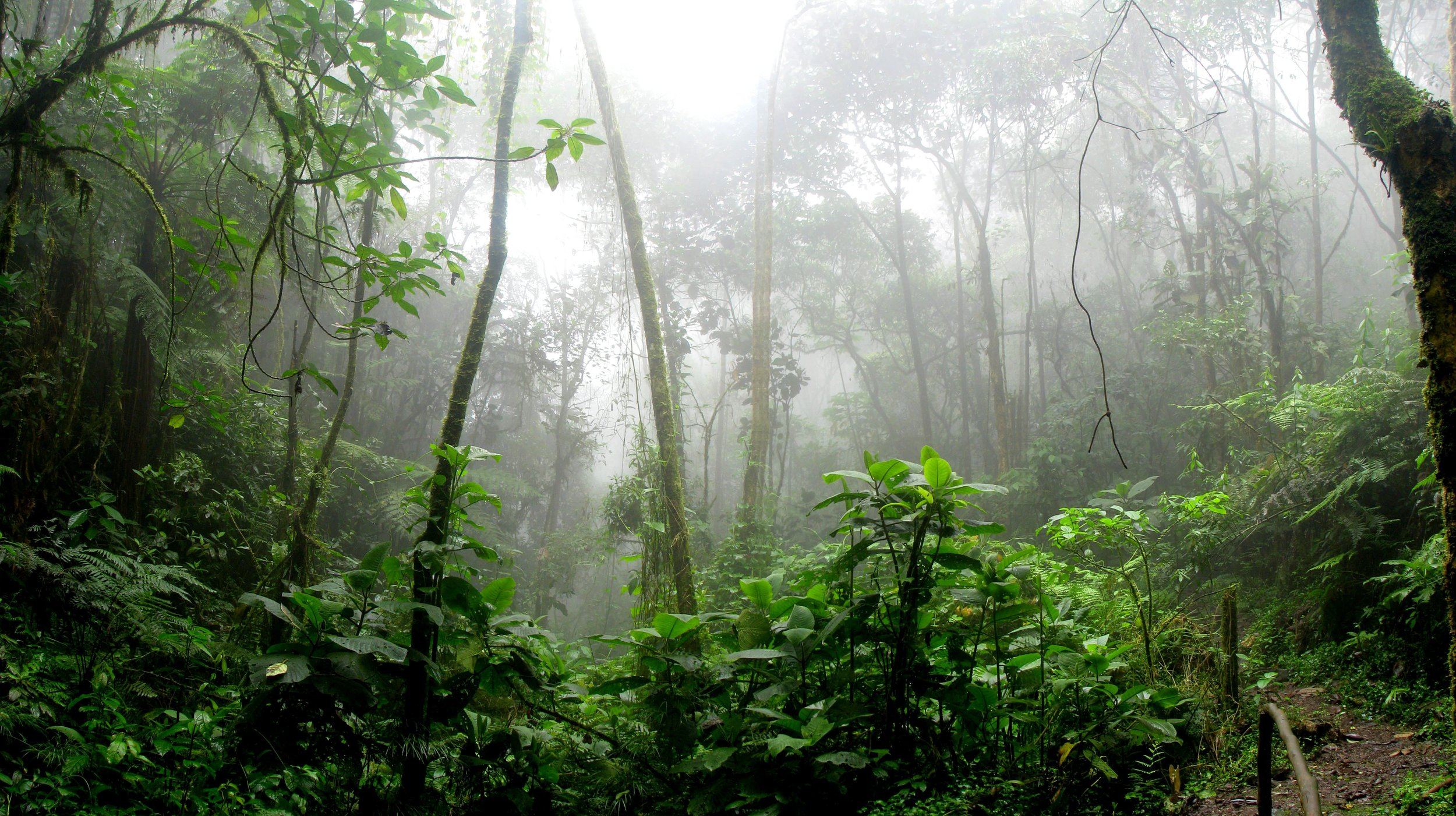 EMMA-RAE-AMAZON-RAINFOREST-FOREST-FIRES-HOW-TO-HELP