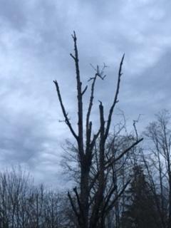 Tree by my mailbox. -Hilma Josal Pic 2016