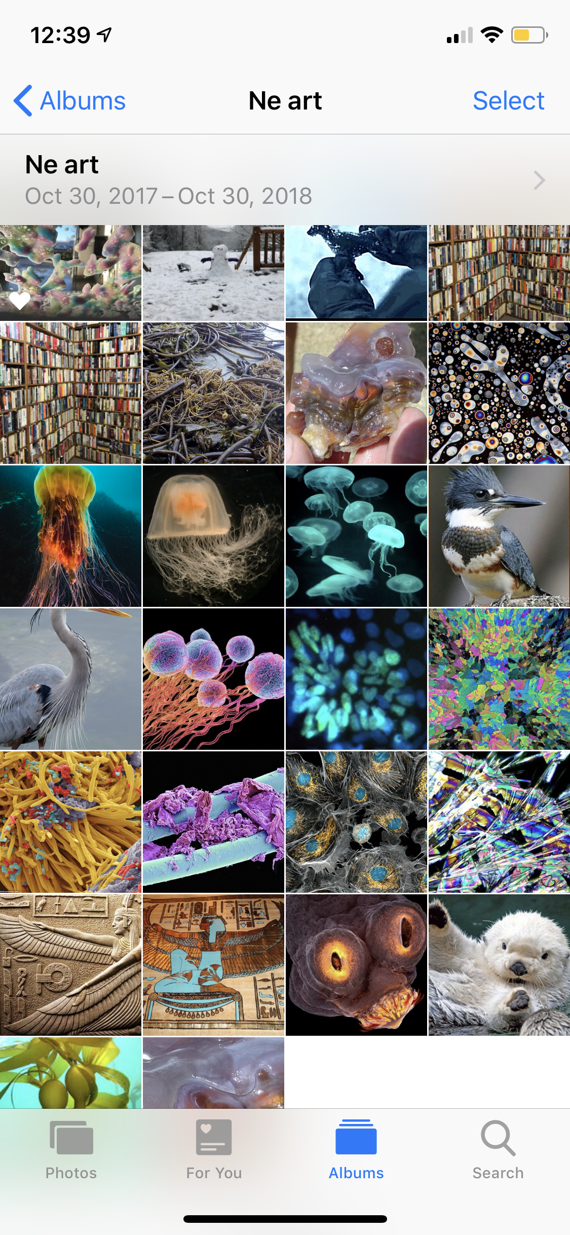 I'll probably start with the snowman, then GoT scene, books, wildlife, seaweed/jellyfish, and then microscope photography.