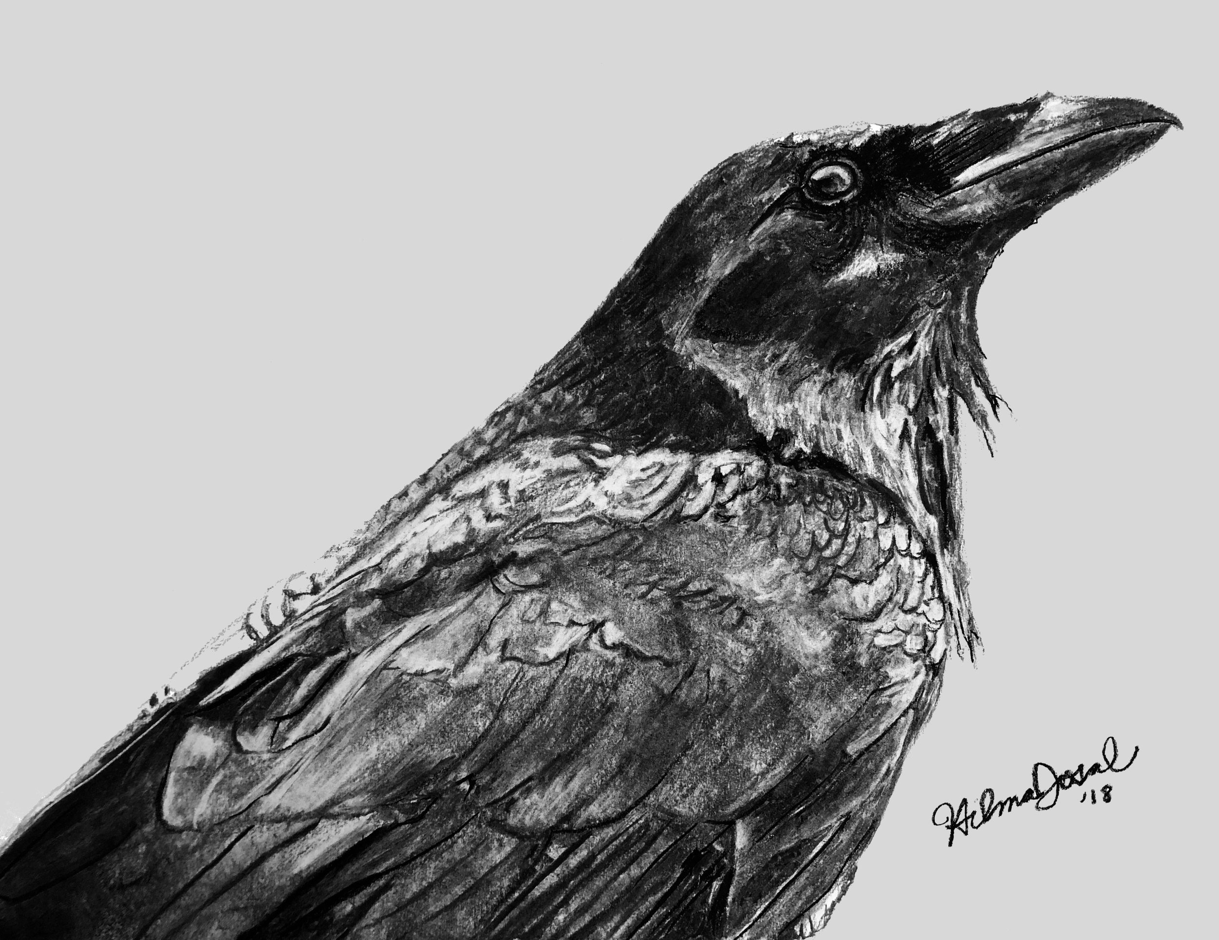 raven black with Hilma Josal signature.jpeg.png