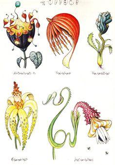 857a0877b2f518b8fc96d02fba06d38e--codex-seraphinianus-carnivorous-plants.jpg
