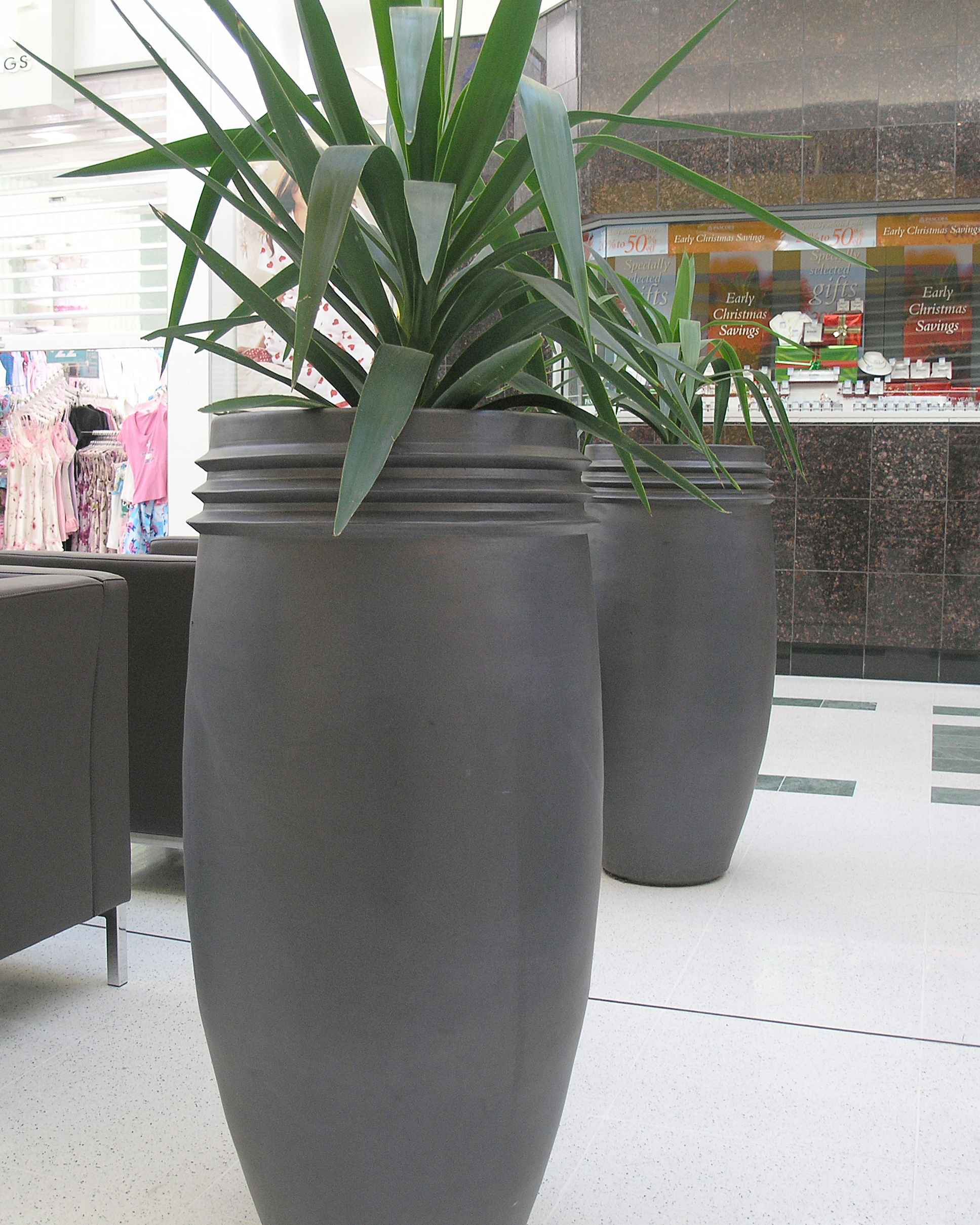 palms2 copy.jpg