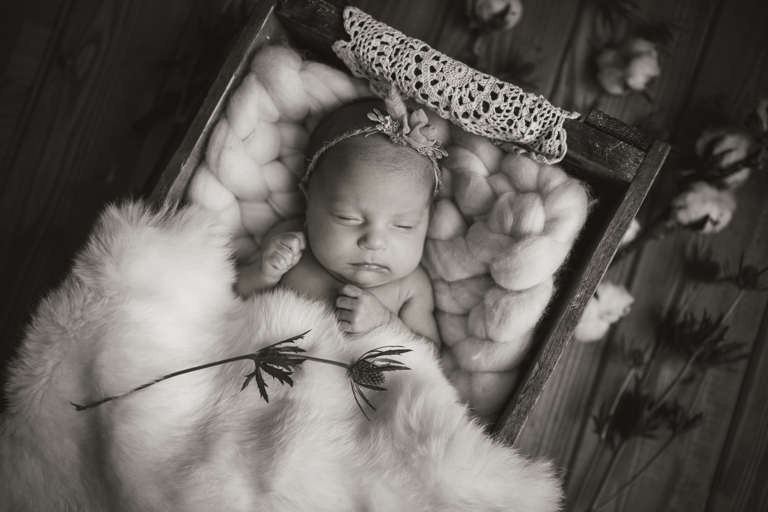 Laura Olson Photography - Nievelina - Newborns - Nova and Luna - December 2016-1490.jpg