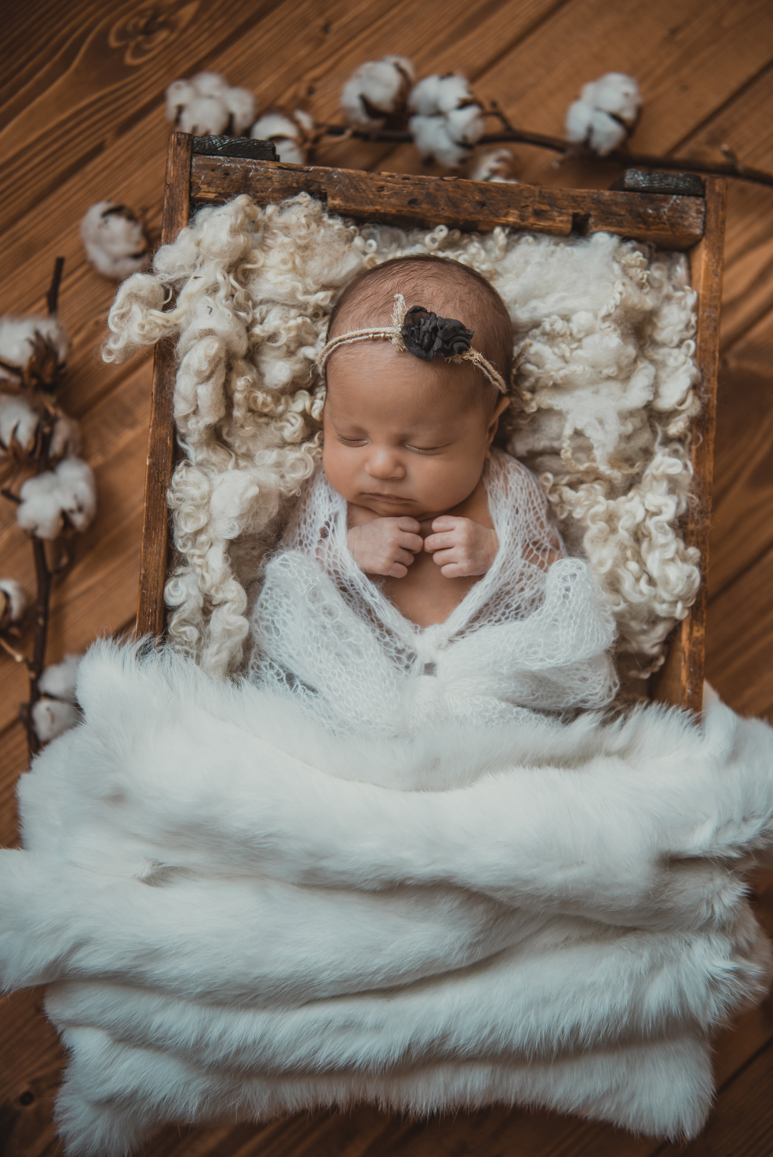 Laura Olson Photography - Nievelina - Newborns - Nova and Luna - December 2016-1585.jpg