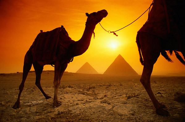VitnesbyrdEgypt1.jpg