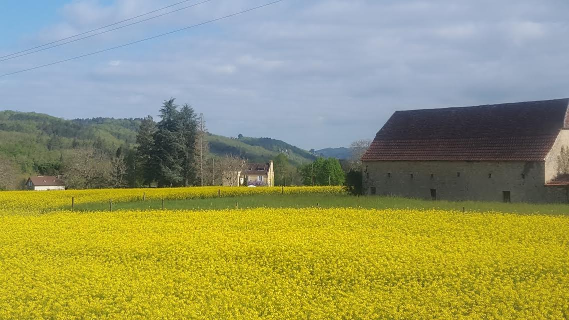 Baillard spring crop 2016.jpg