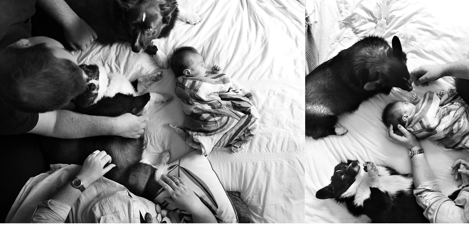 newborn-family-dogs-photography-city-of-casey-melbourne.jpg