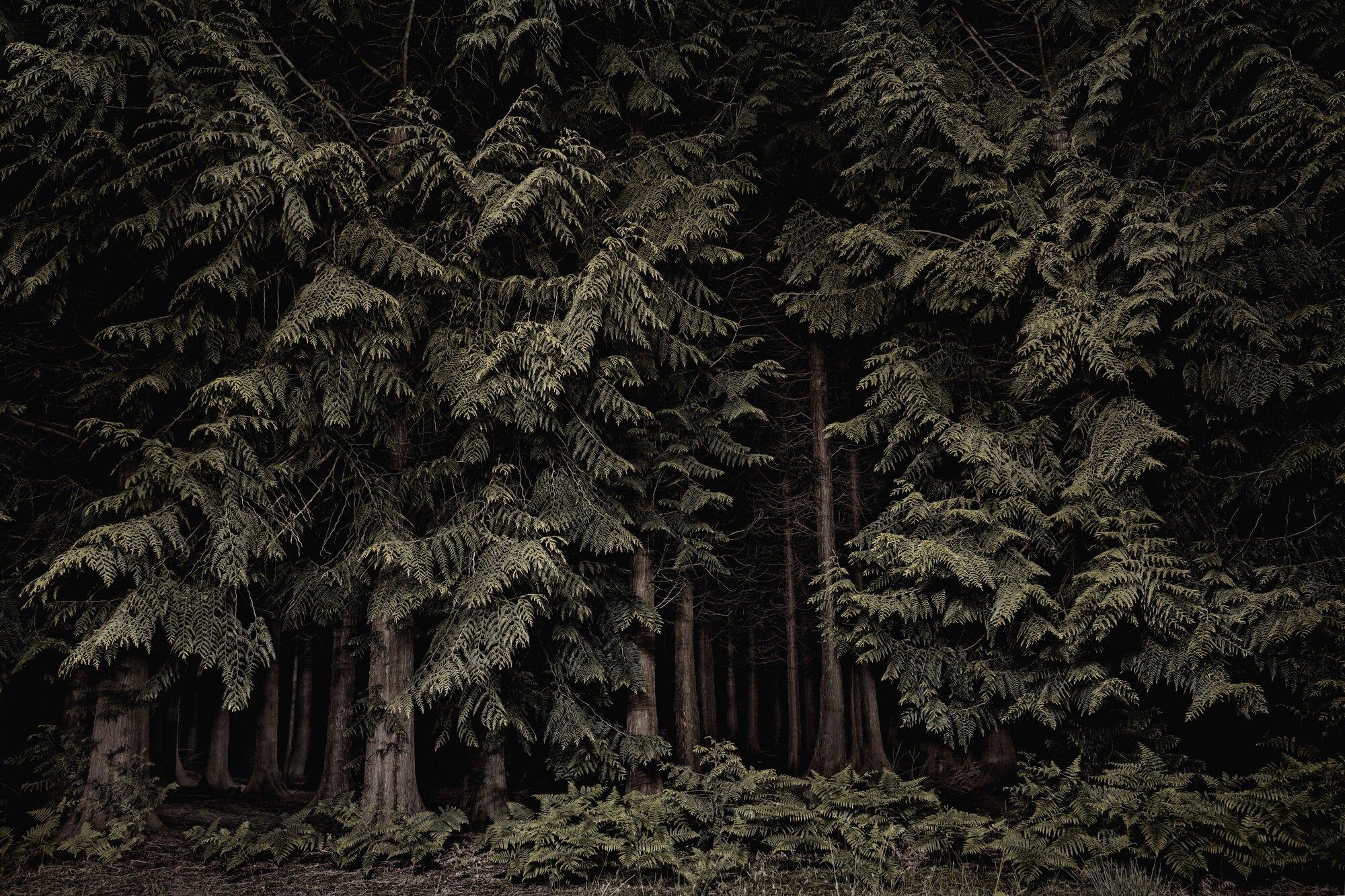 oldhouse-cedars1.jpg