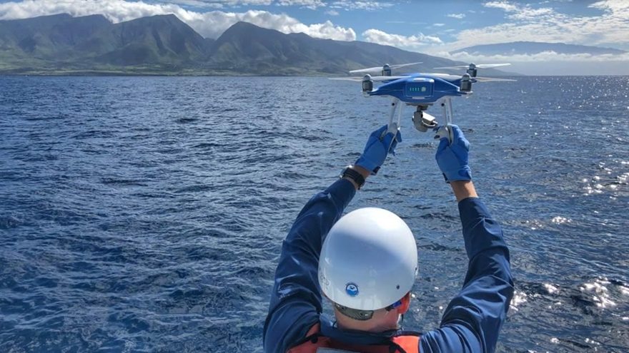 DJI drone from the Freefly program bing trained to resue whales