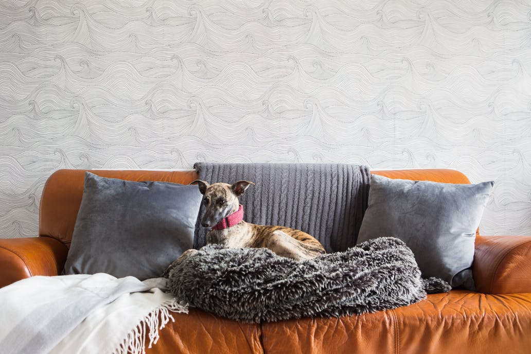 Mimi the whippet in front of Seascape wallpaper