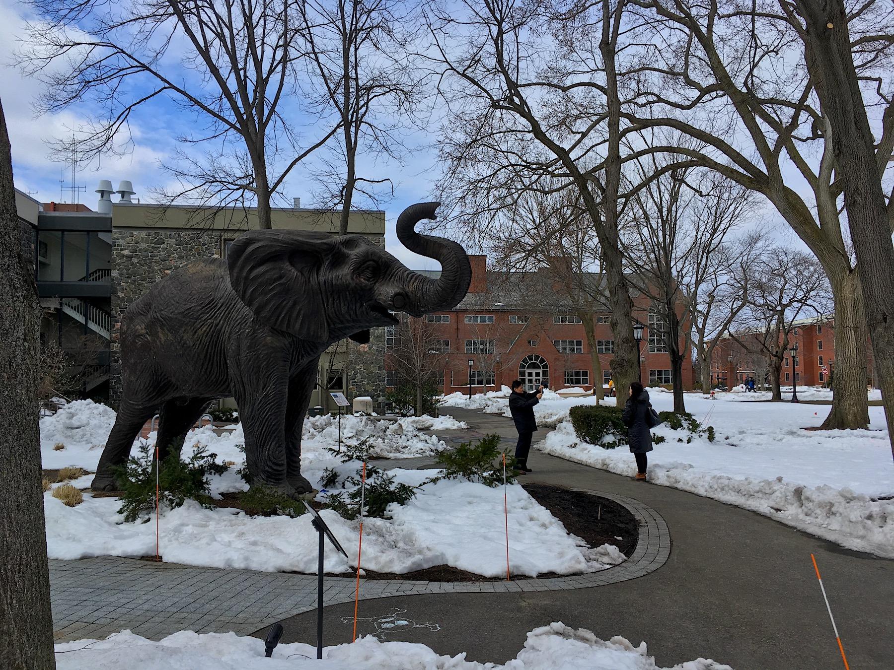 Tufts-Mascot.jpg