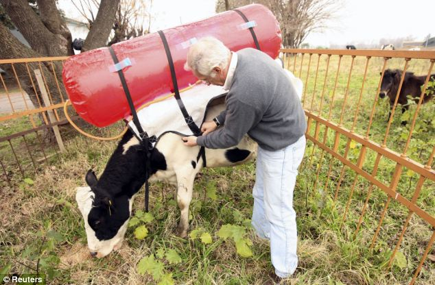 And then there's the methane recapture proposal in California (no shit — actual photo)
