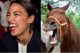 I may be stupid, but I have horse sense!