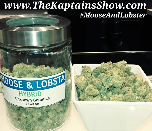 Moose and Lobsta is very rare 70% Sativa strain of cannabis. The original breeder of Moose & Lobsta is currently unknown. However, a 2nd breeder named Professor P/Dynasty Genetics has bred a version of Moose & Lobsta using a cross between Kapi Snapple & Oregon Huckleberry. Moose & Lobsta has been known to relieve stress and depression while greatly enhancing creativity.