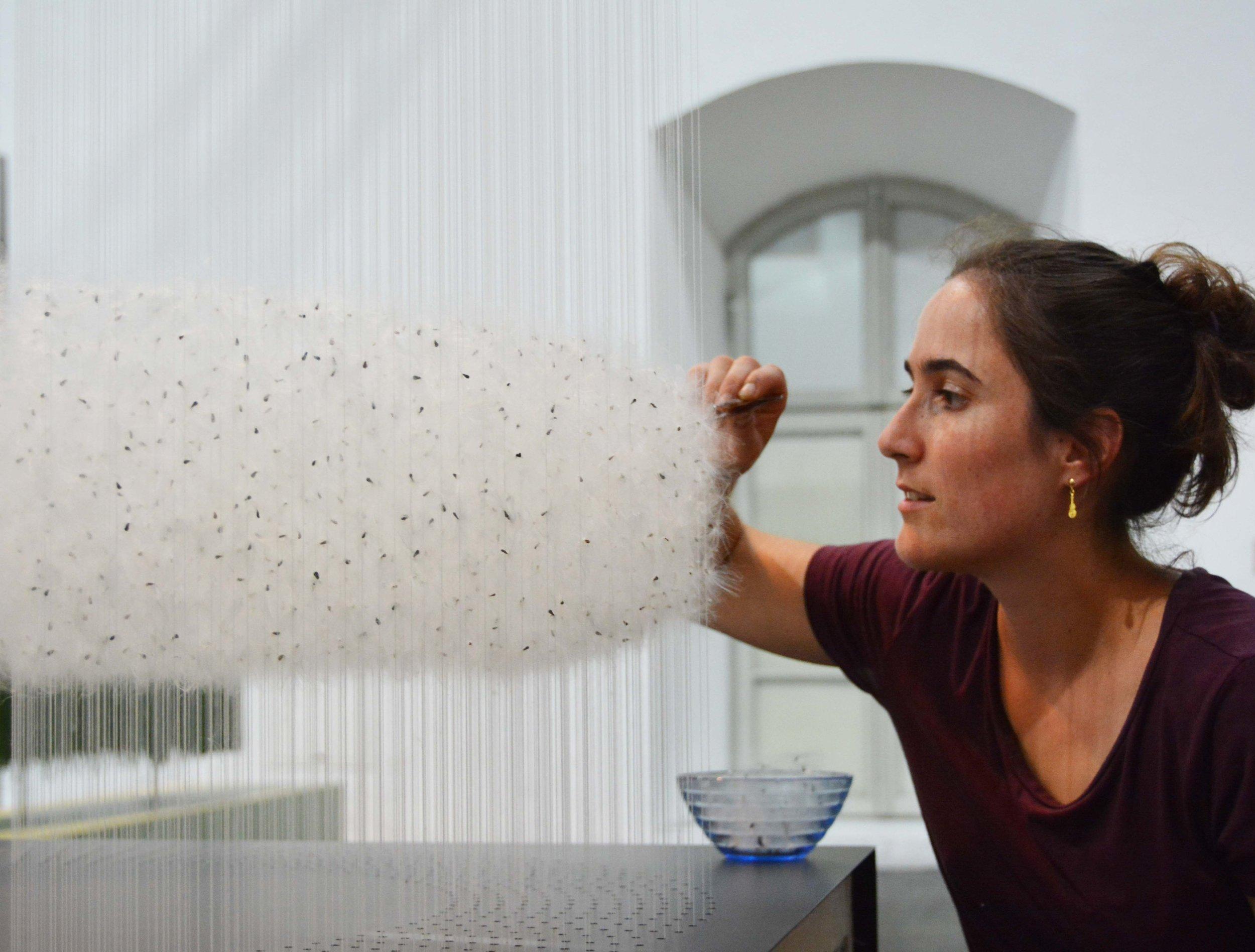 Unglaublich aber wahr: 15'000 einzelnen Asclepia-Samen fügte die Schweizerin Valérie Jucker zu einer atemberaubenden schwebenden Ringform zusammen.