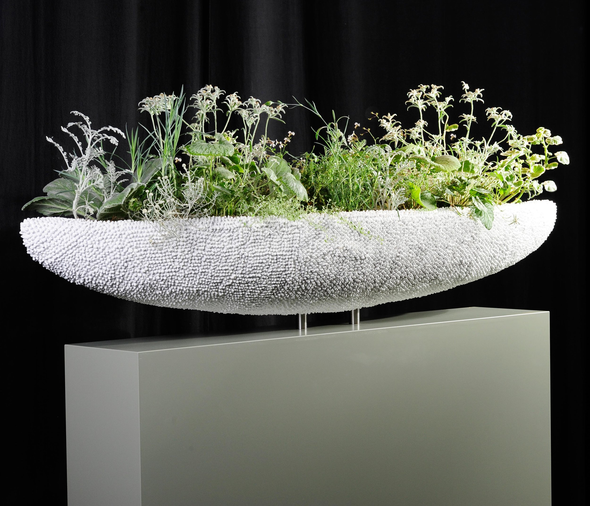 Aus weiss überzogenen Wattestäbchen gestaltete Stefan Egerbacher die Schale für seine spannende länglich-schwebende Pflanzarbeit.