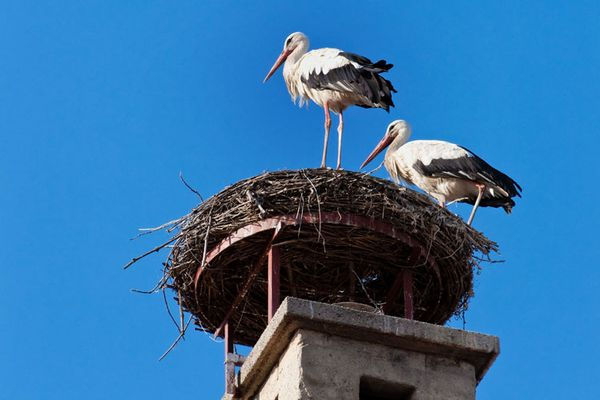 Rust is well known for the storks that make their nests on the chimneys in town
