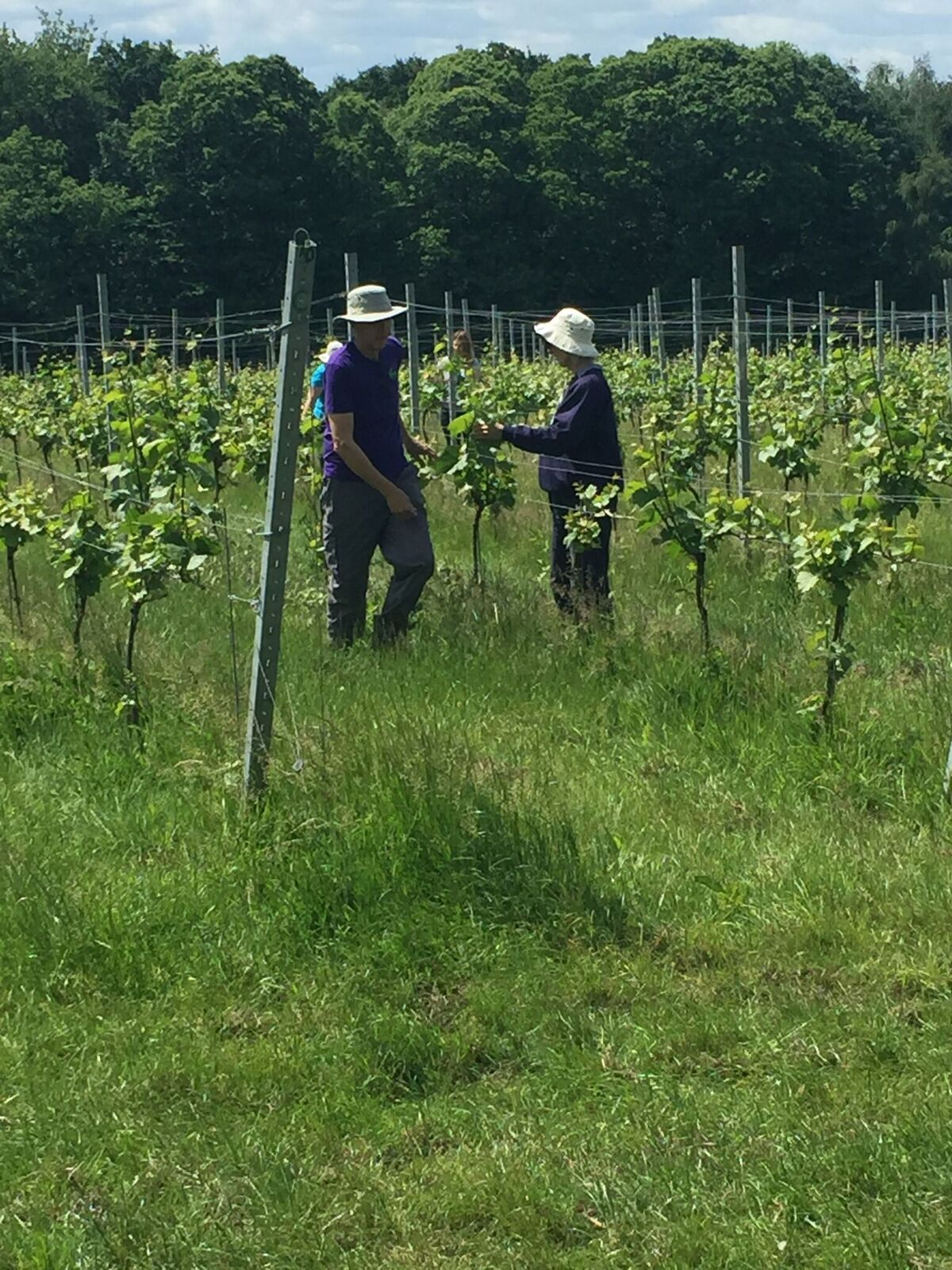 vineyard1.jpg