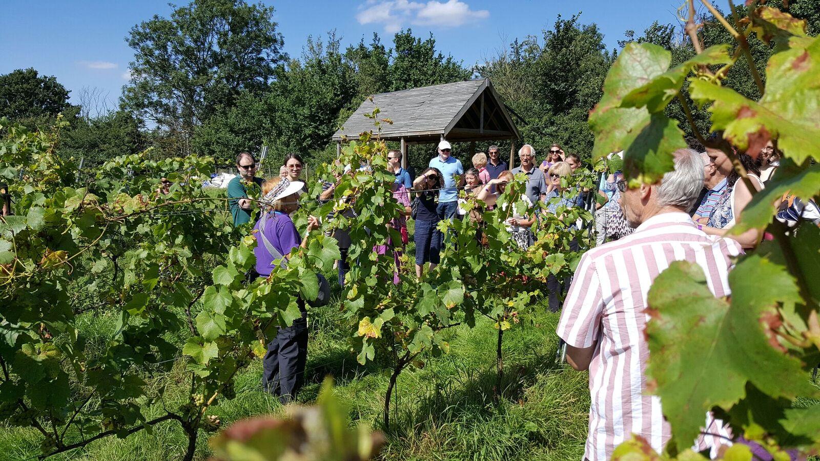 vineyardtour2.jpg