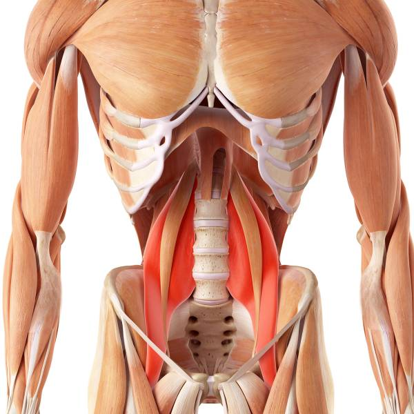https://breakingmuscle.com/fitness/get-to-know-your-psoas
