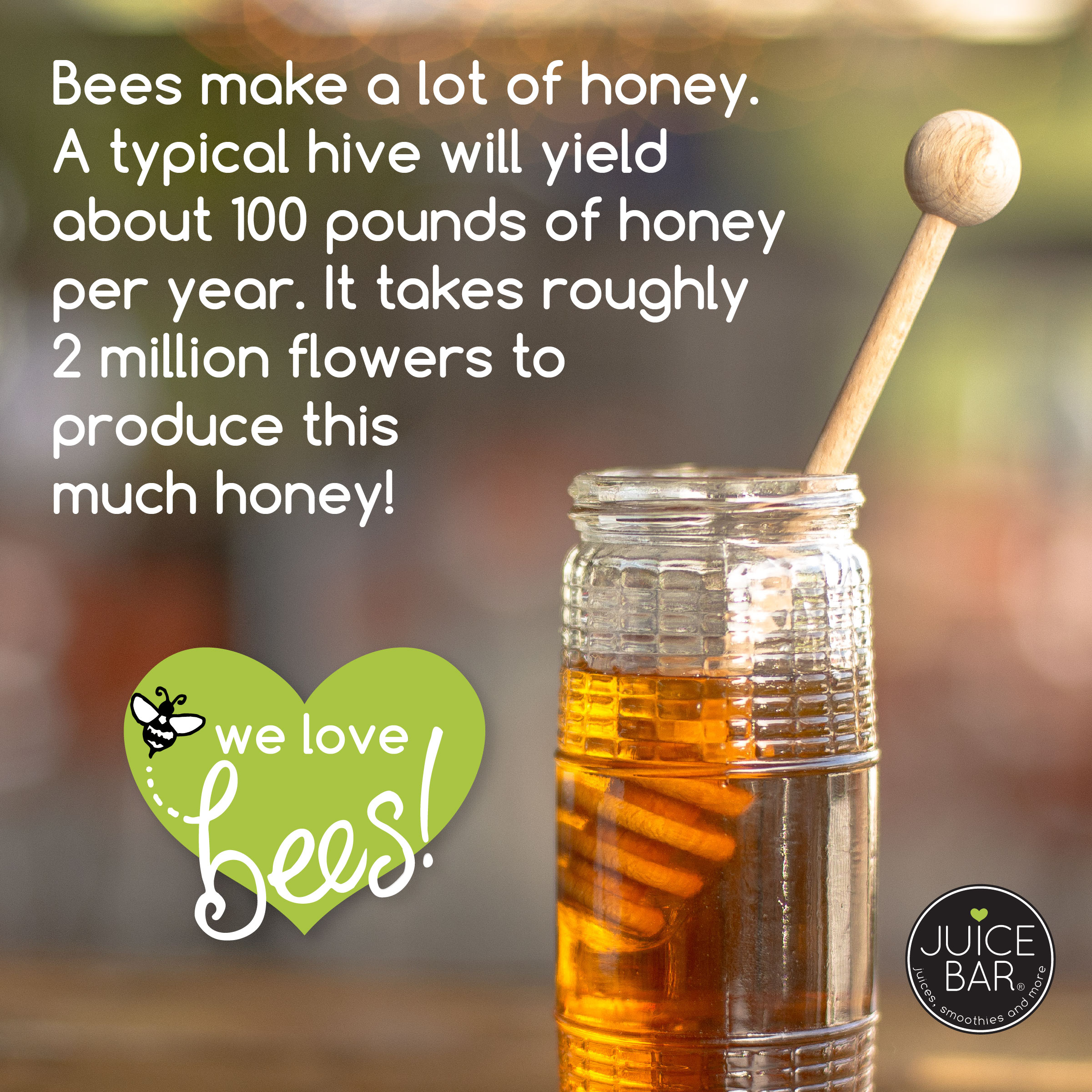 fun facts_WE LOVE BEES-05.jpg