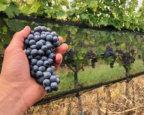 Chateau-WineProcess-12.jpg