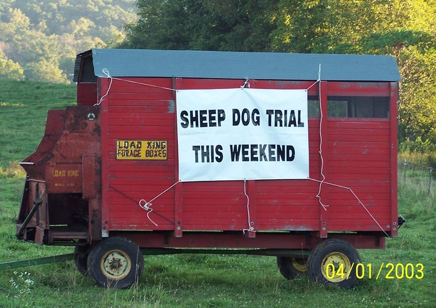 sheepdog trial.jpg