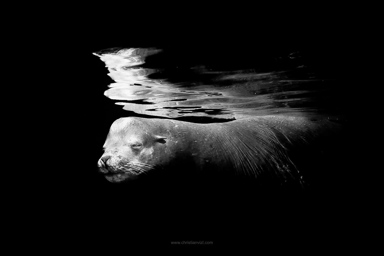 SeaLion.jpg