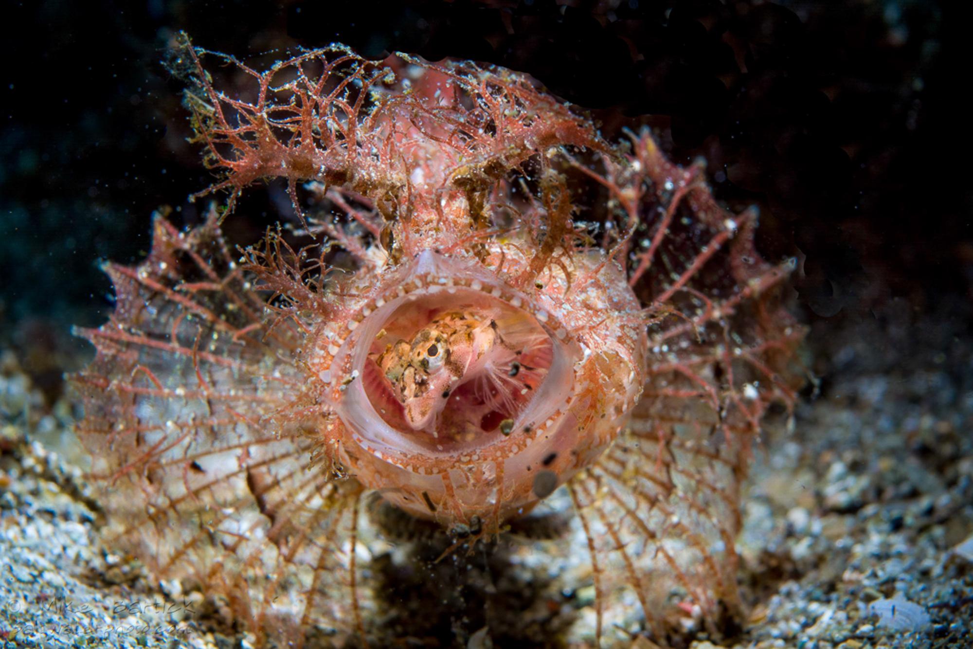 1-3rd macro world shootout _ambon scorpionfish (1 of 1).jpg