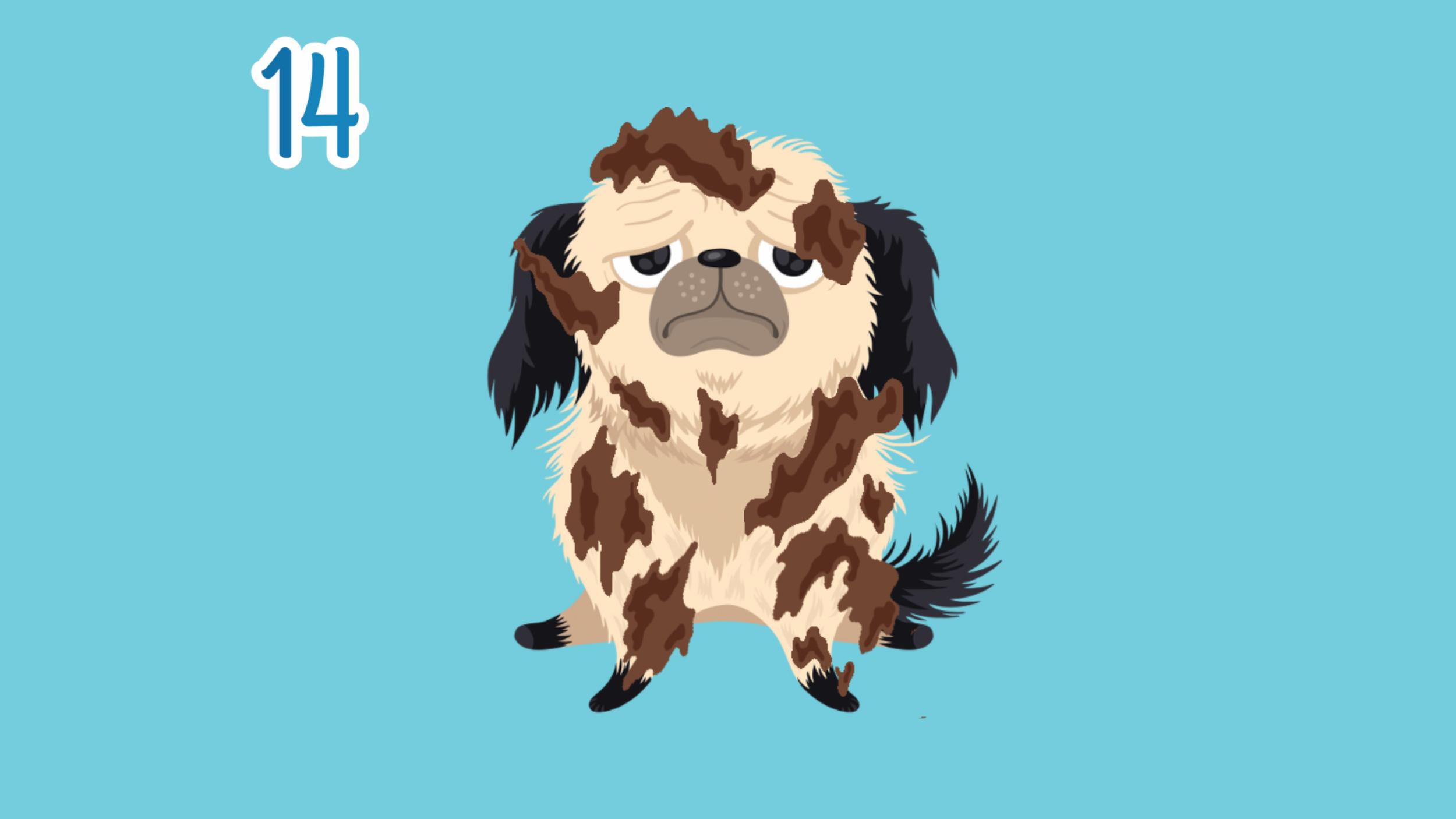 Random_App_of_Kindenss_Dog.png