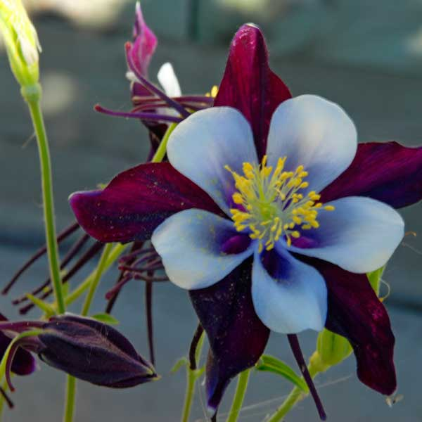 Plants and flowers abound at  T  he Gardens at Columbine