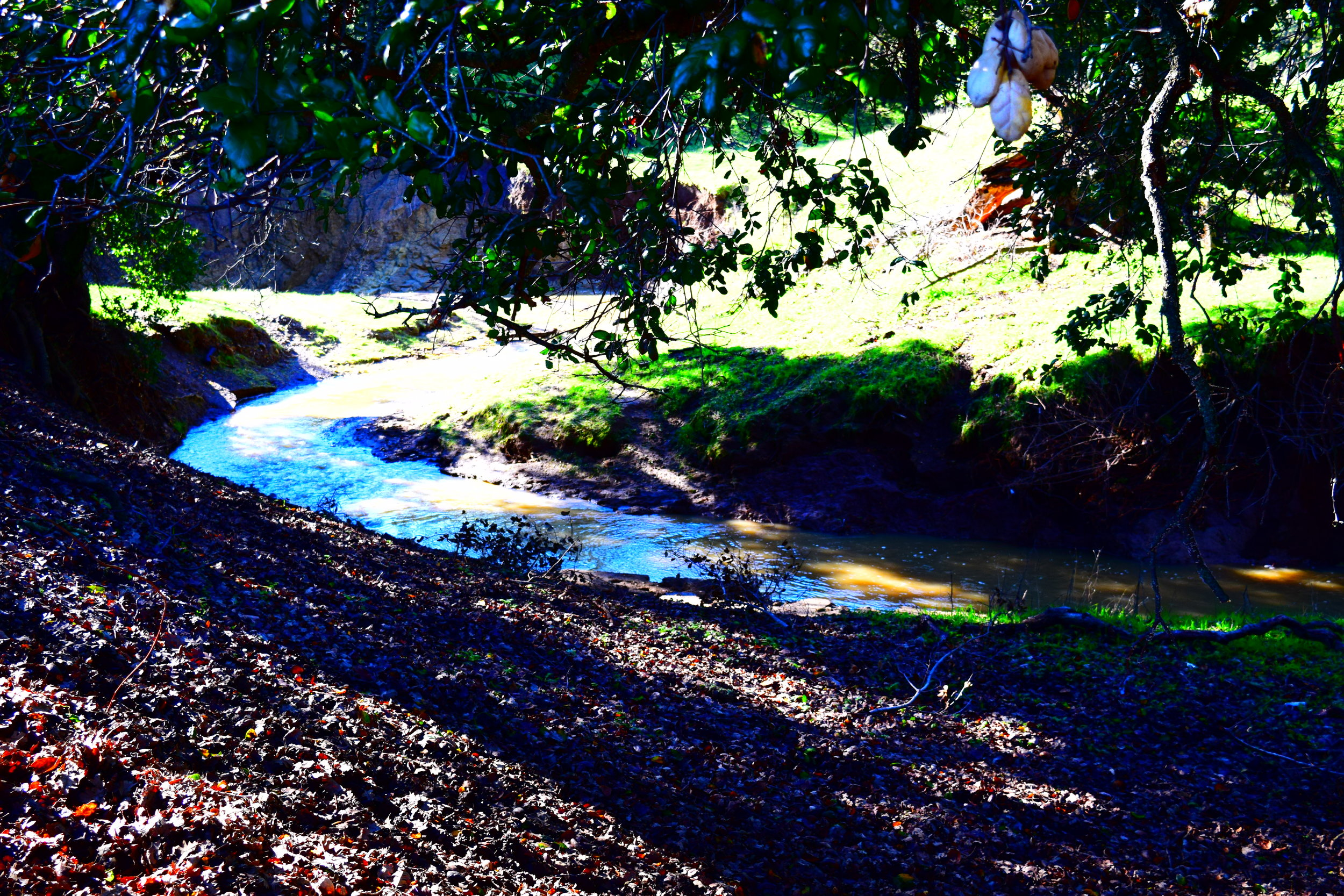Tassajara Creek January 2017
