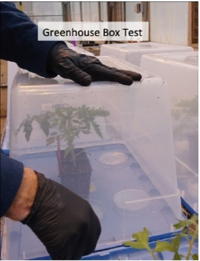 Standard Greenhouse Box Test, petrie dishes contain herbicide solutions with bioassay plants. - Figure 1.