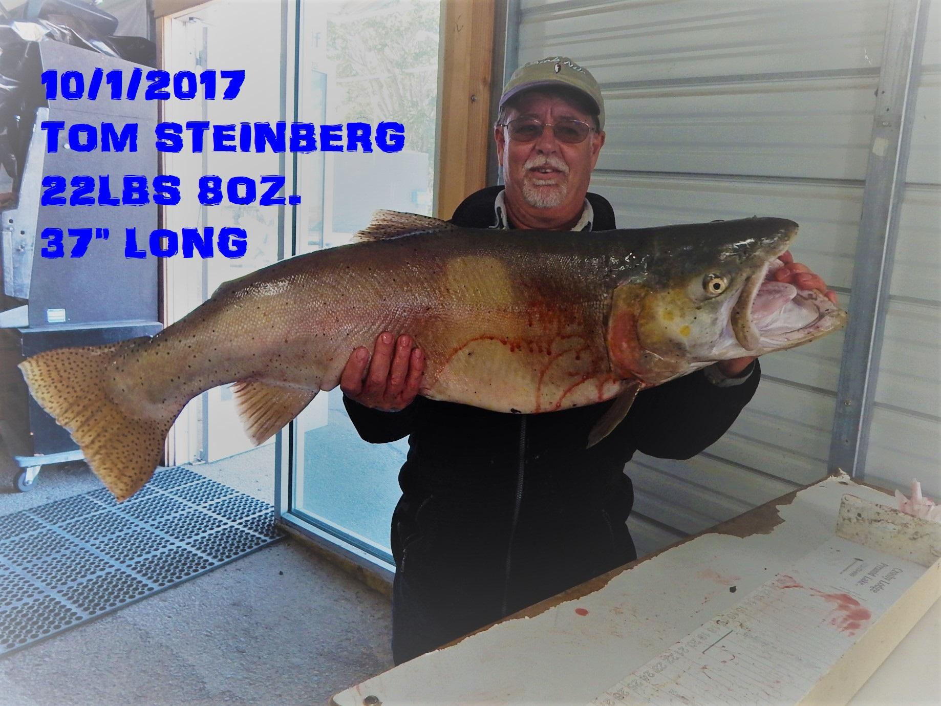 TOM STEINBERG 10-1-17.jpg