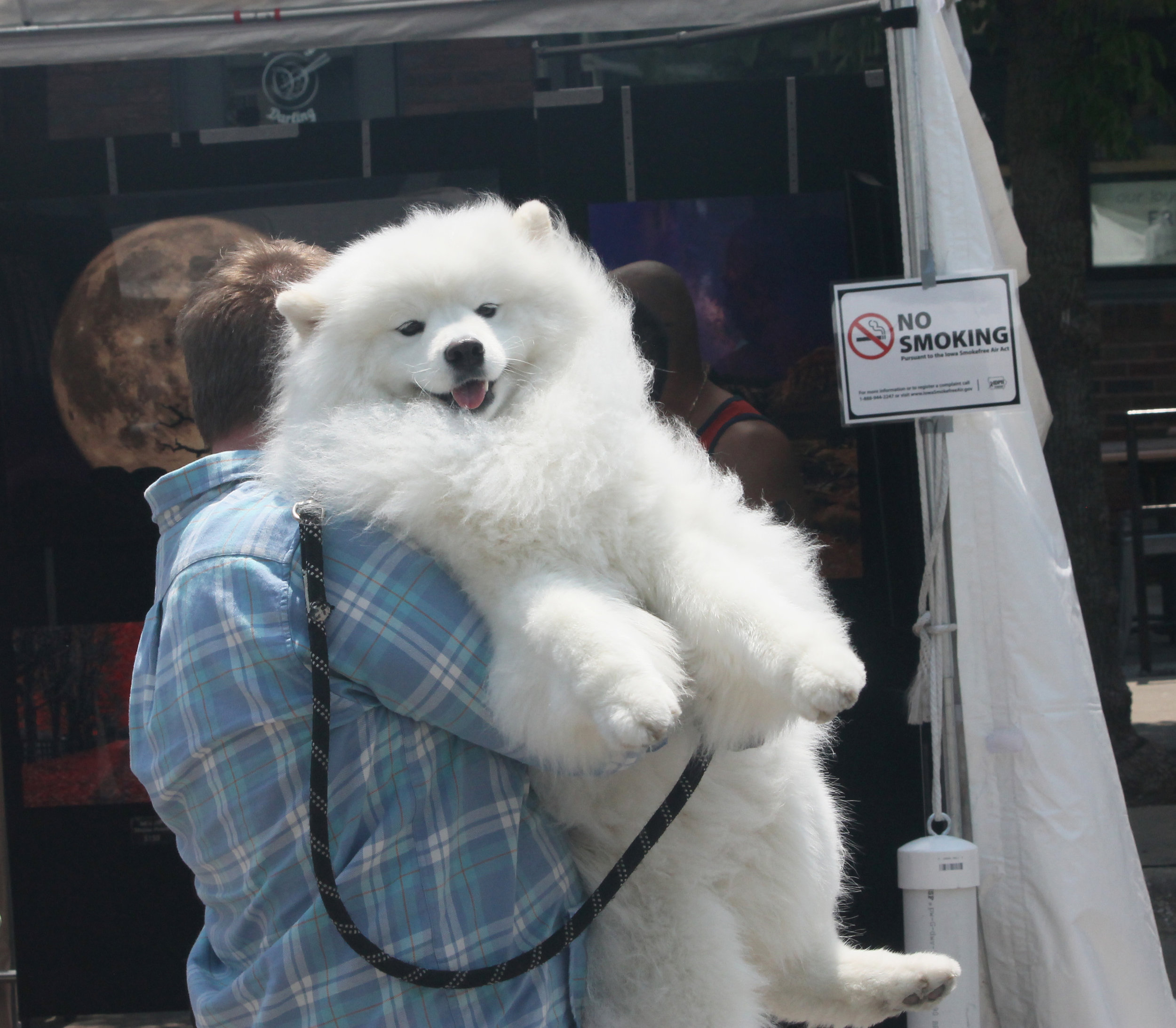 A fluffy festival goer gets a hug from its owner. Photo by Lauren Arzbaecher
