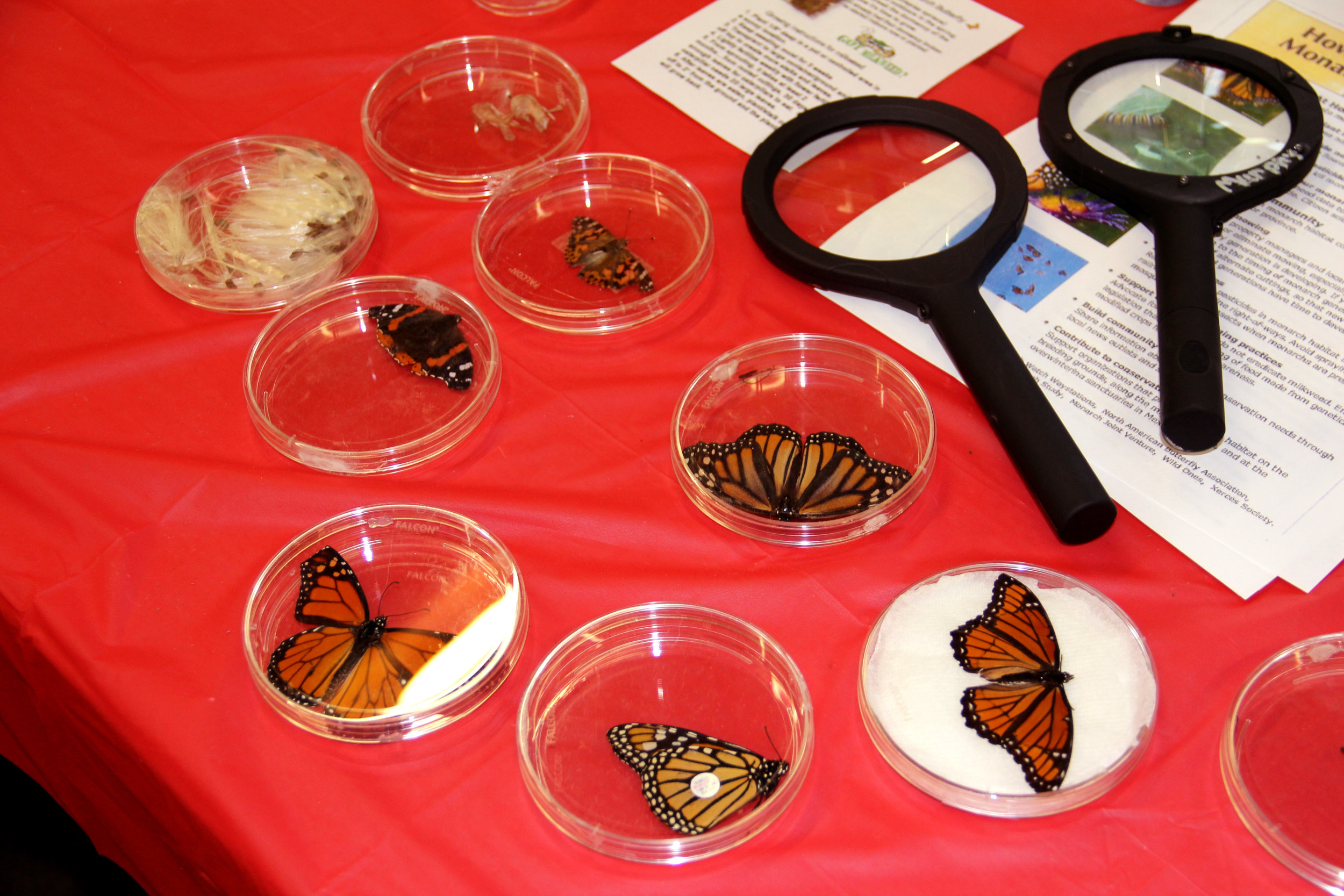 Butterflies on display at Earth Fest, an event put on by Iowa City to raise awareness about sustainability