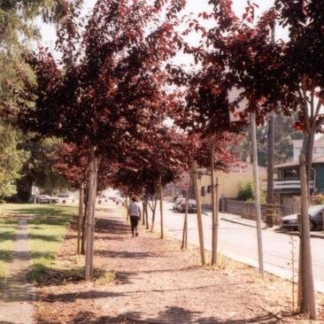Courtland Creek  Oakland, CA