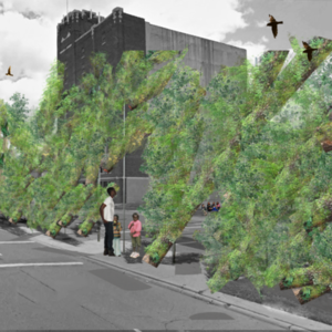 Street Trees  Detroit, MI