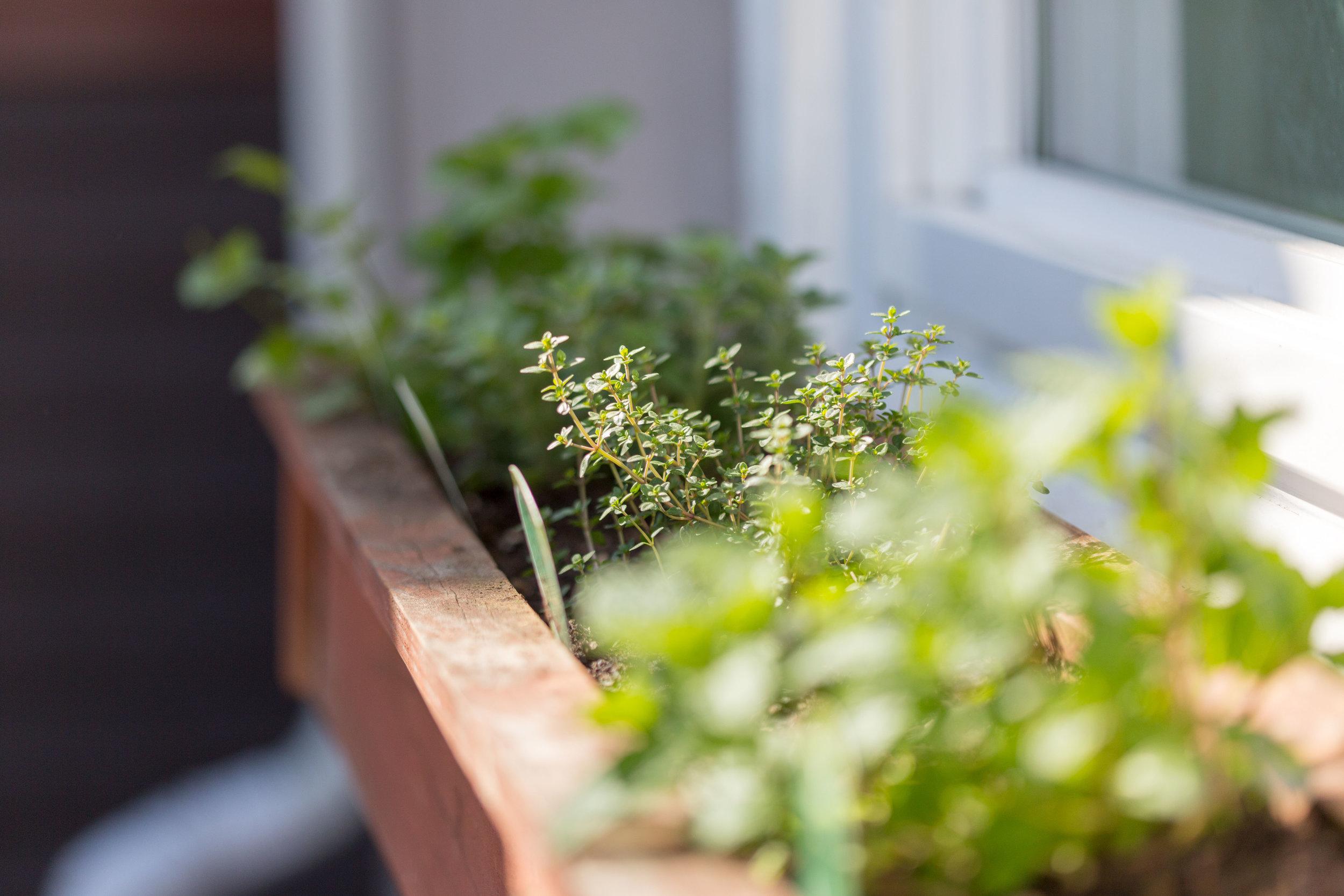 27 Herbs.jpg