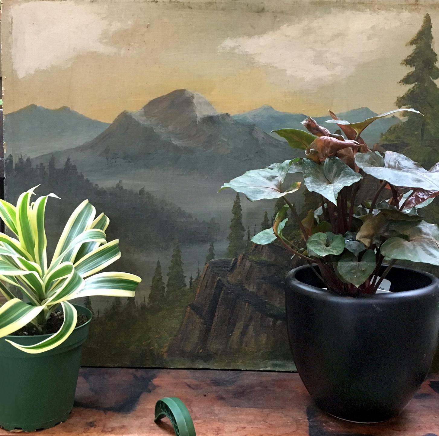 Painting + plants.jpg