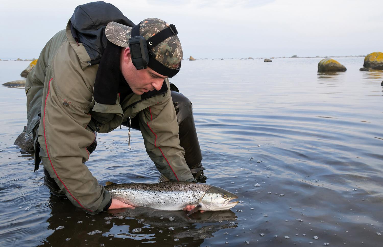 Sjoorret-Sea-trout-78099.jpg
