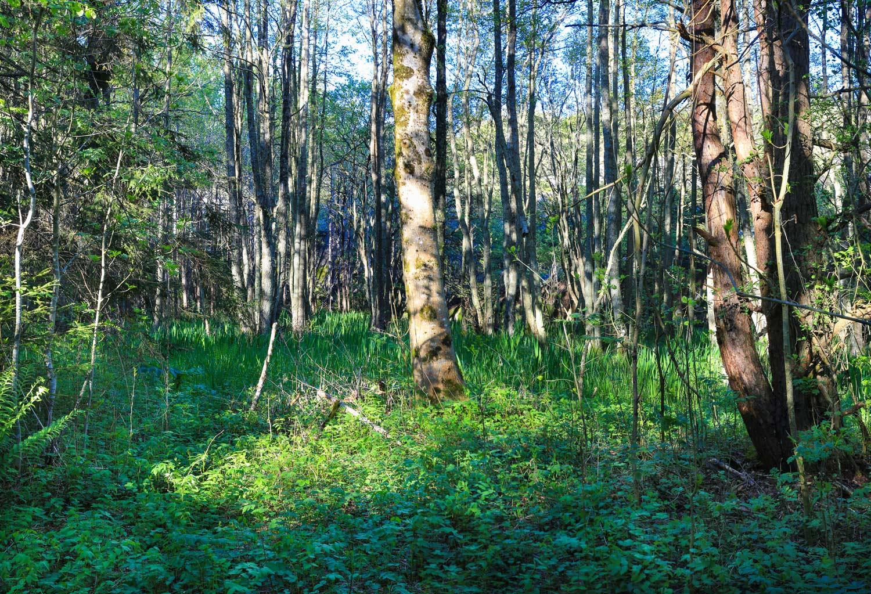 Deler av Guttormsvauen er også et naturreservat og har en rik svartorsumpskog. Dyr, fugler,insekter, blomster og planter stortrives i dette naturparadiset.