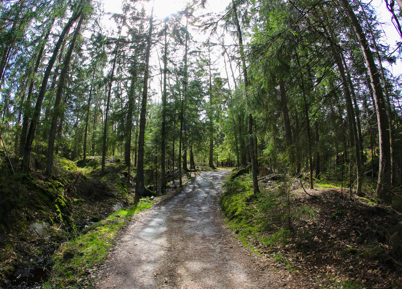 Første del av turen går igjennom typisk Hvaler-skog.
