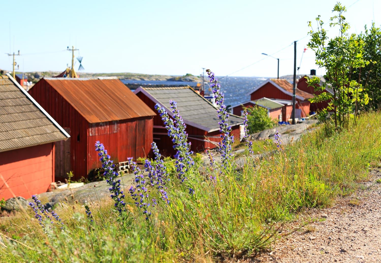 Hvaler-og-de-forste-2014-093.jpg