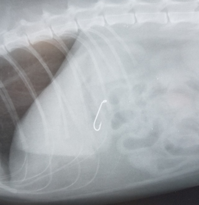 "Fish hook found inside ""Milo"""