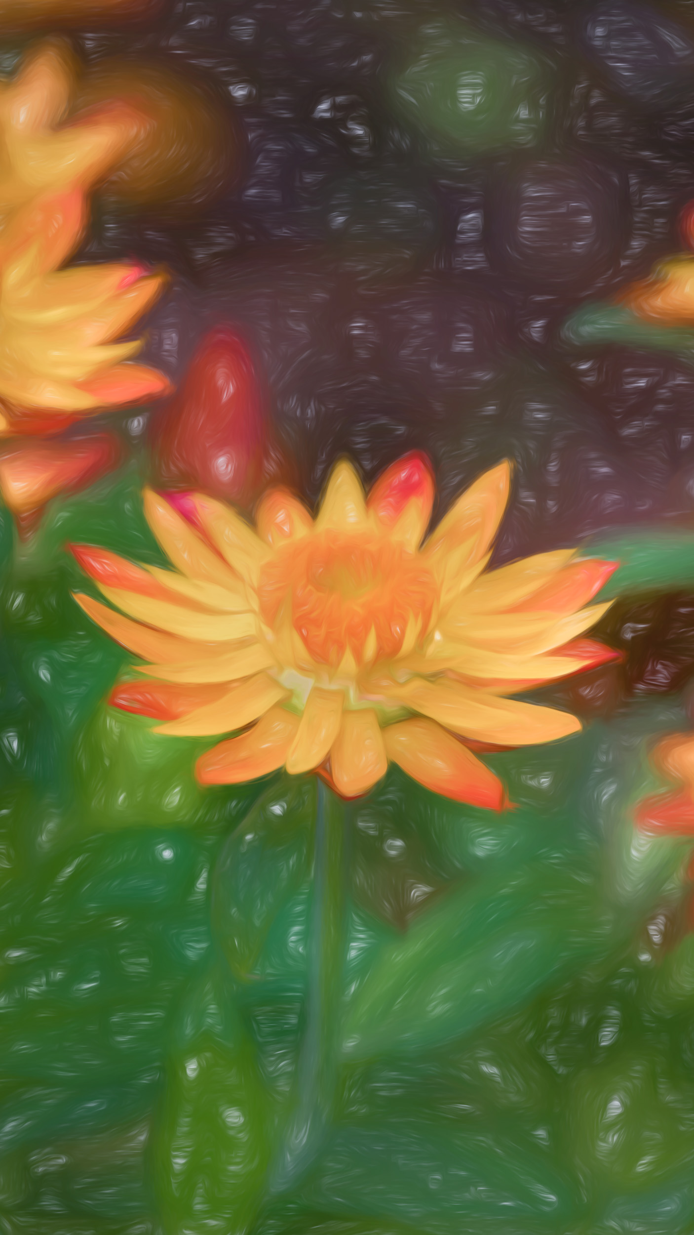 """Strawflower"" Photography Artist Kevin Sibbitt"