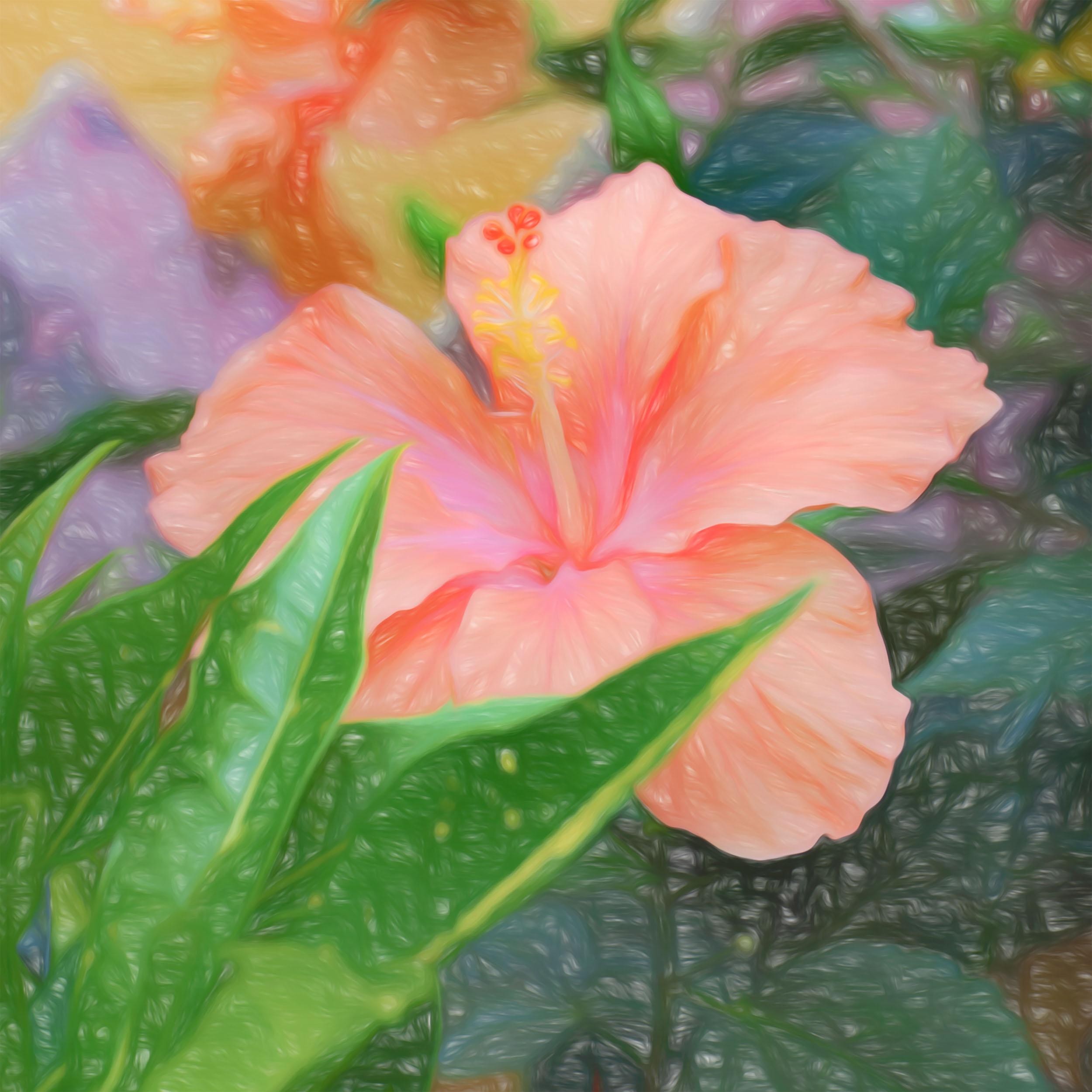 """Peach Hibiscus Squared"" - Photography Artist Kevin Sibbitt"